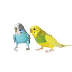 Preparaty dla ptaków ozdobnych
